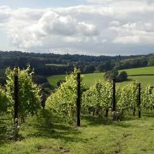BUSI JACOBSOHN WINE ESTATE Utflykt till Susanna Busi-Jacobshons vingård (preliminärt)